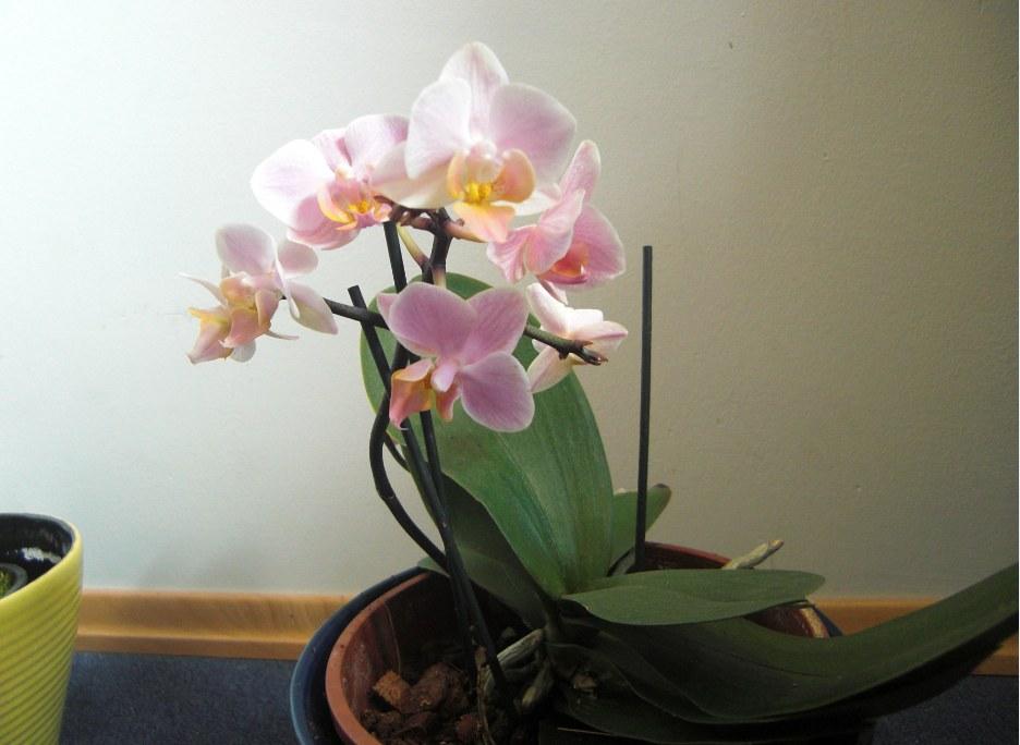 Erste Fragen zur Züchtung und zu neuen Pflanzen F599185709